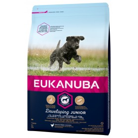 Eukanuba junior